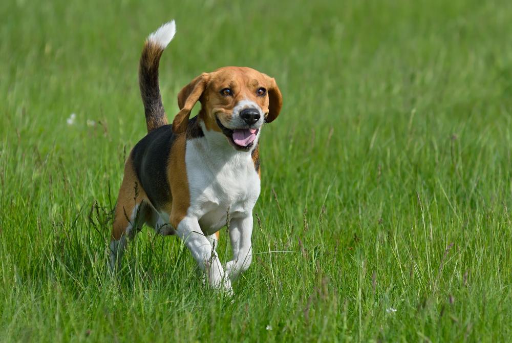 Hampstead Dog Walkers | Premier Dog Walker