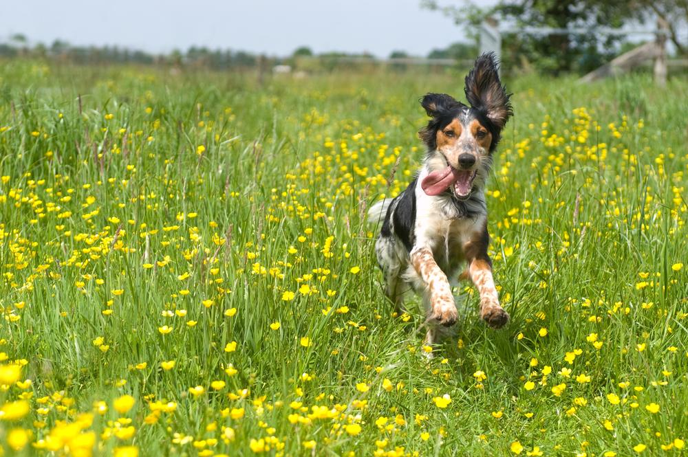 Primrose Hill Dog Walkers | Premier Dog Walkers