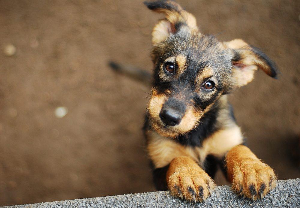 Barnet Dog Walkers