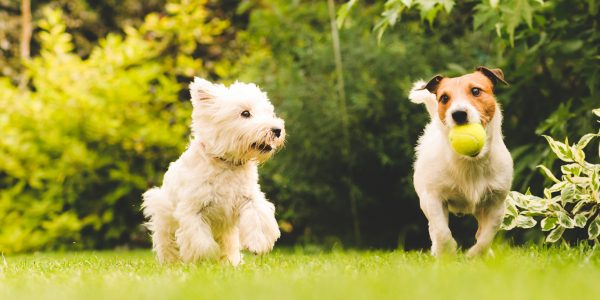 4 Ideas For Socialising Your Dog