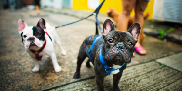 Top Benefits Of Walking For You And Your Dog