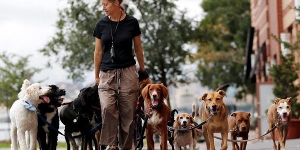 The Benefits Of Working With A Dog Walker