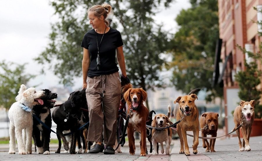 Dog Walkers, pet care, London, exercise