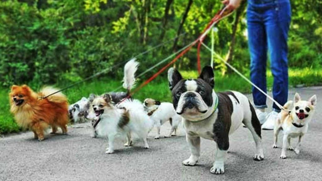 Dog, Walkers, Hampstead Heath, London