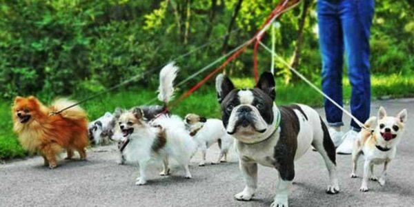 Dog Walkers Around Hampstead Heath