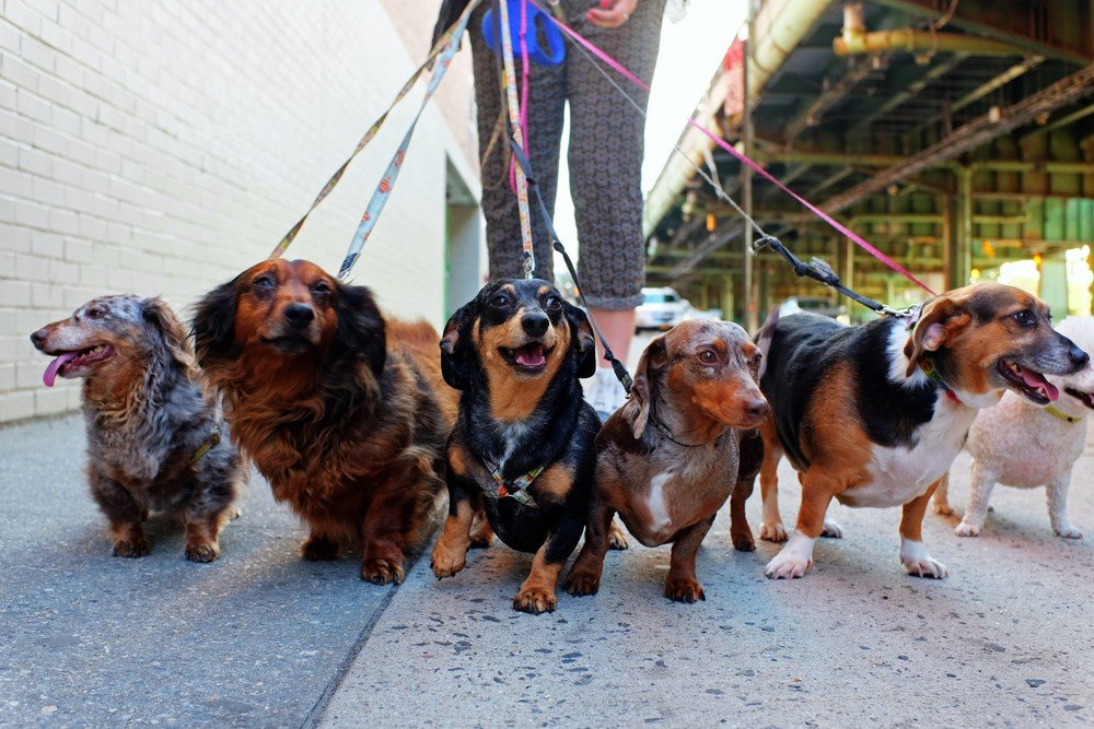 Choosing-the-Perfect-Dog-Walker-for-Your-Pup-2