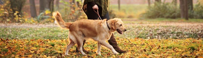 Choosing The Perfect Dog Walker For Your Pup