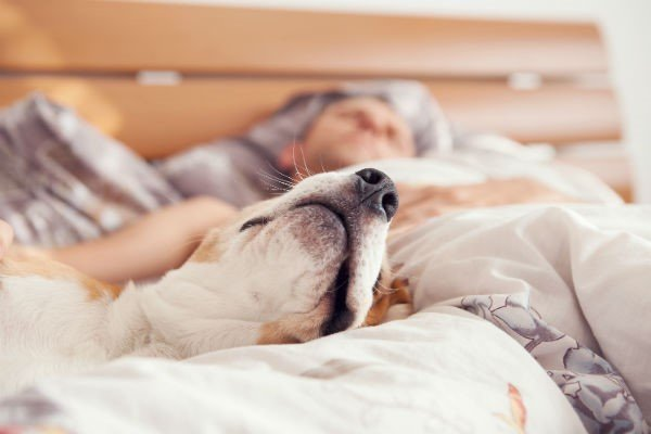 Five-Reasons-Why-You-Need-to-Make-Dog-Walking-a-Habit1
