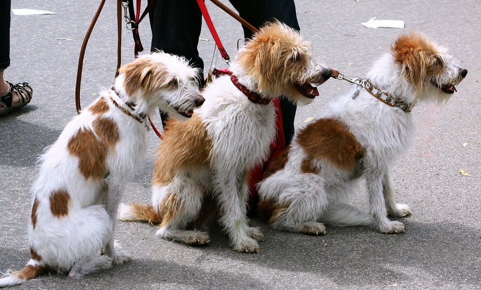 Top-Skills-to-Look-for-In-A-Dog-Walker-Pic-2