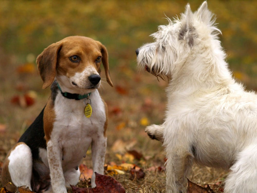 3-Benefits-of-Taking-Your-Canine-Friend-to-the-Dog-Park-Regularly
