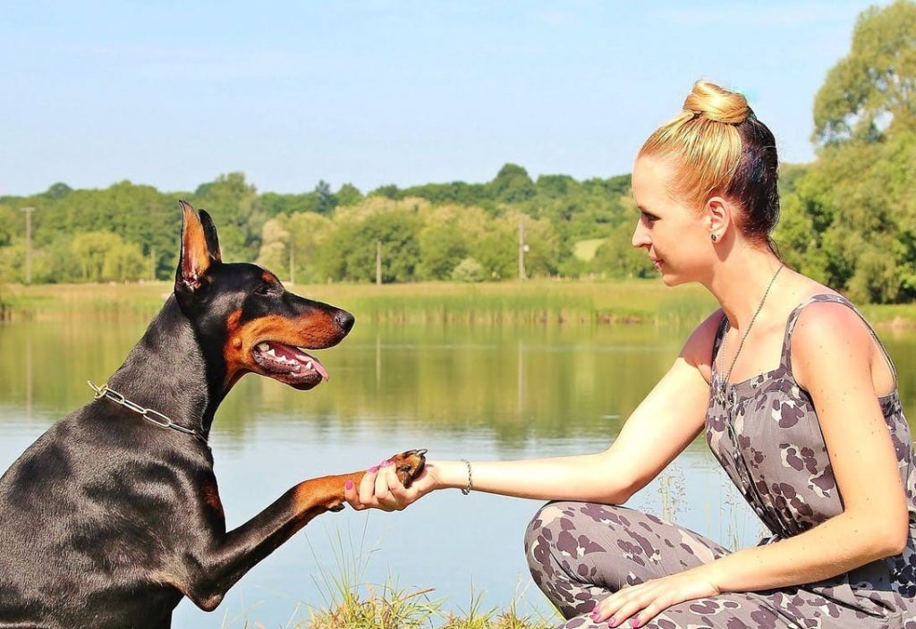 3-Of-the-Best-Outdoor-Activities-to-Try-With-Your-Four-Legged-Friend-1