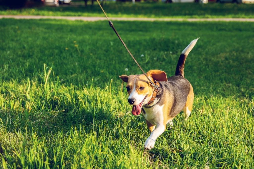3-Things-to-Keep-in-Mind-When-Taking-Your-Canine-Friend-to-The-Dog-Park-for-the-First-Time-Feature