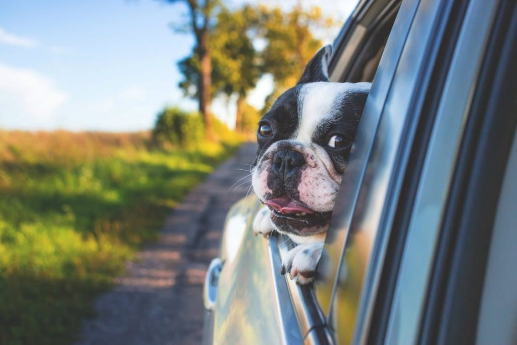 Getting Ready For An Adventure-Filled Road Trip With Your Four-Legged Friend! Feature Pic
