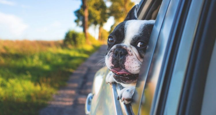Getting Ready For An Adventure Filled Road Trip With Your Four Legged Friend! Feature Pic