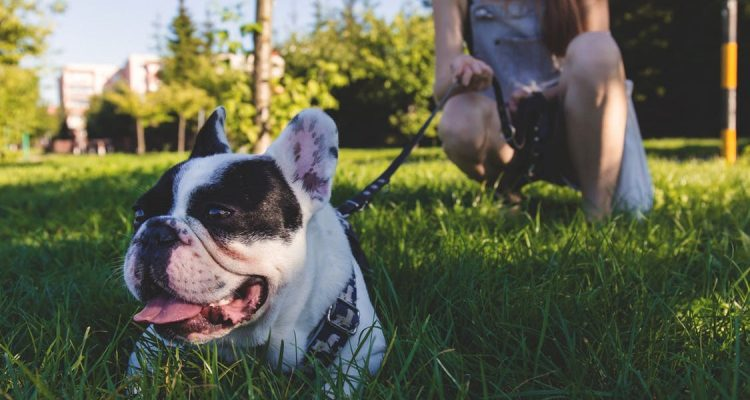 Your Guide To The Best Dog Parks In London Feature