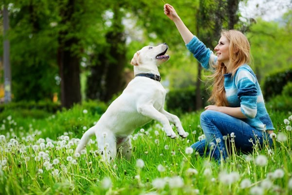 How-to-make-your-canine-friend-happy-1