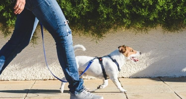 WHY DO YOU NEED A DOG WALKER – EVEN WHEN YOU ARE WORKING FROM HOME