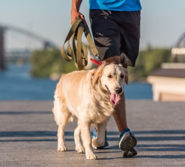 FIND-THE-BEST-DOG-WALKERS-IN-LONDON-1