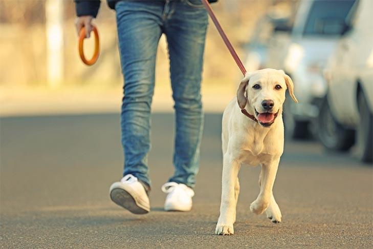 DOG WALKERS IN LONDON