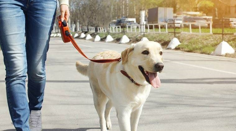 HOW-DOG-WALKING-CAN-HELP-YOUR-PET'S-HEALTH-1