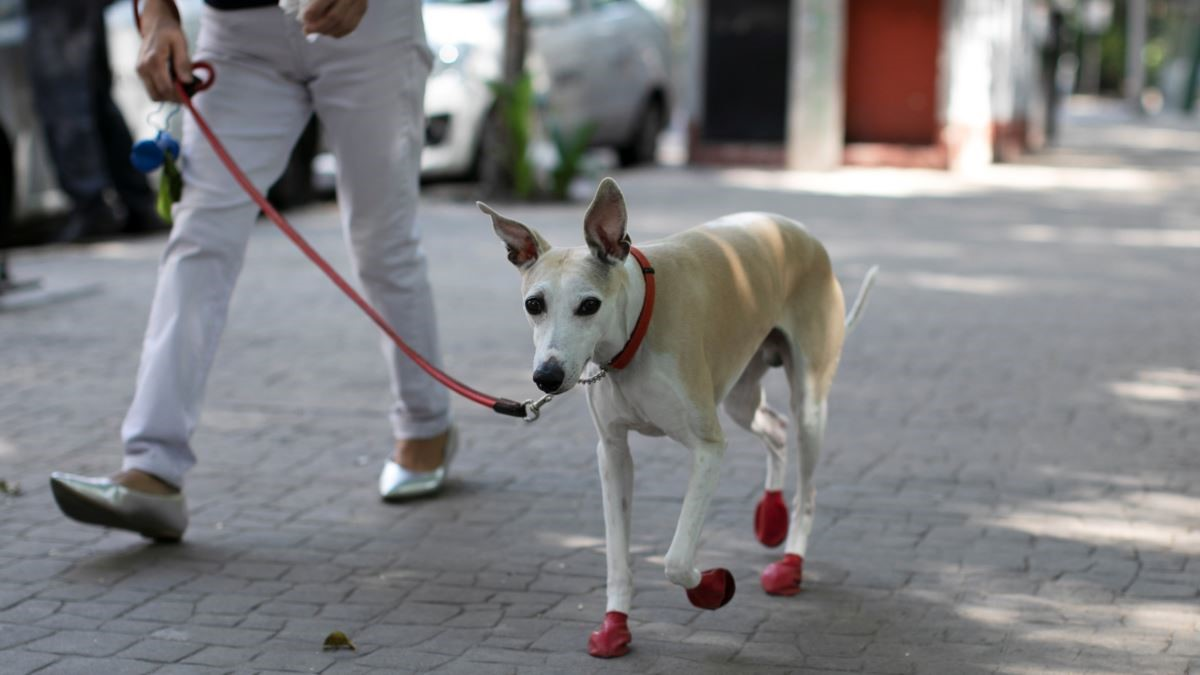 HOW DOG WALKING CAN HELP YOUR PET'S HEALTH