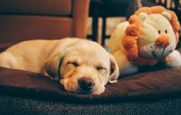Your Dog's Disruptive Sleep Cycle