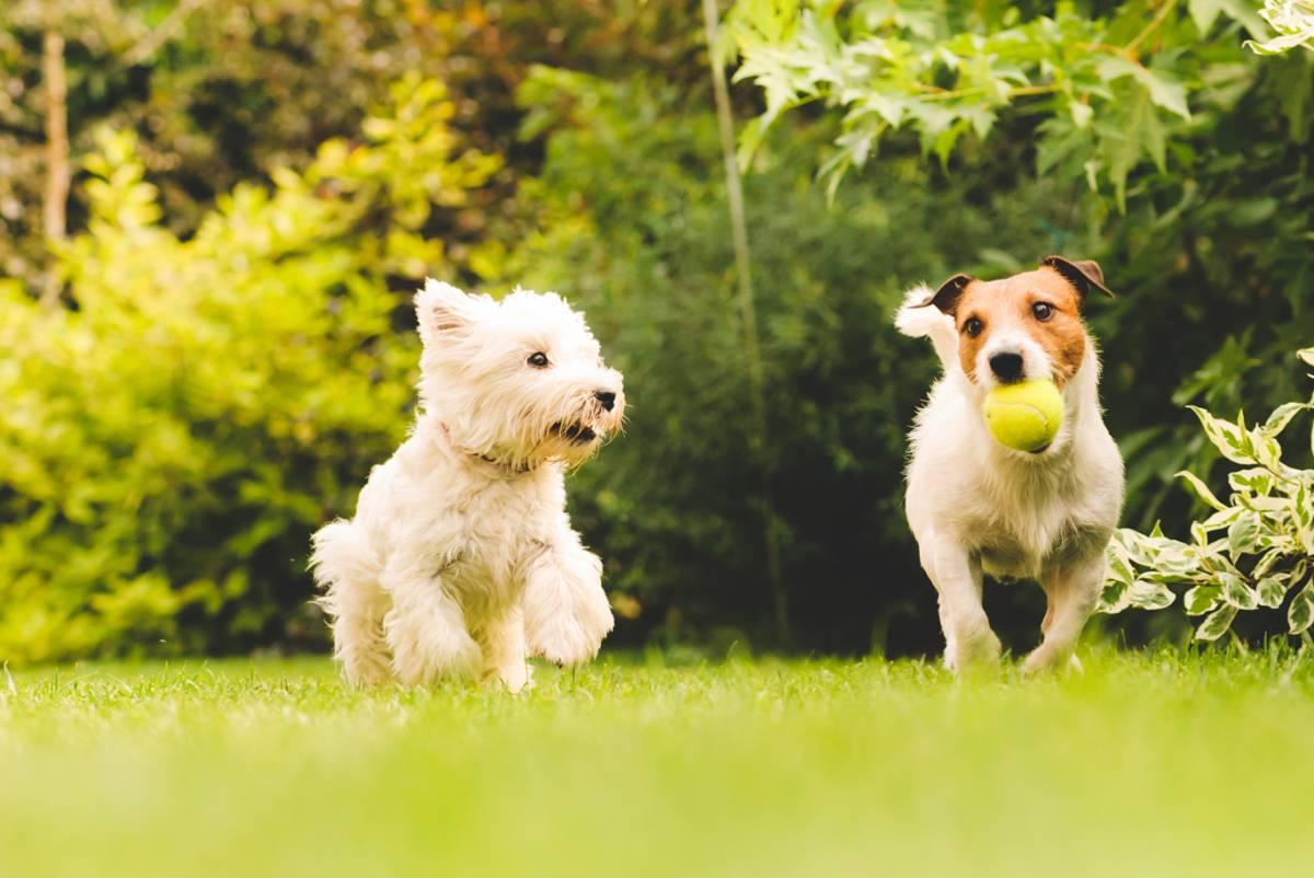 Best Dog Walkers in London - Highest Reviewed - Premier Dog